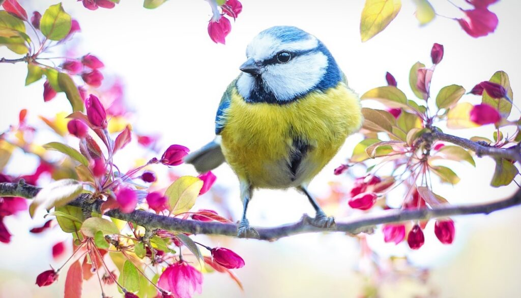 Bird sitting on a branch of flowers